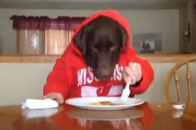 Dog Eats Wth Human Hands