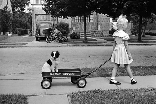 Dog in a wagon
