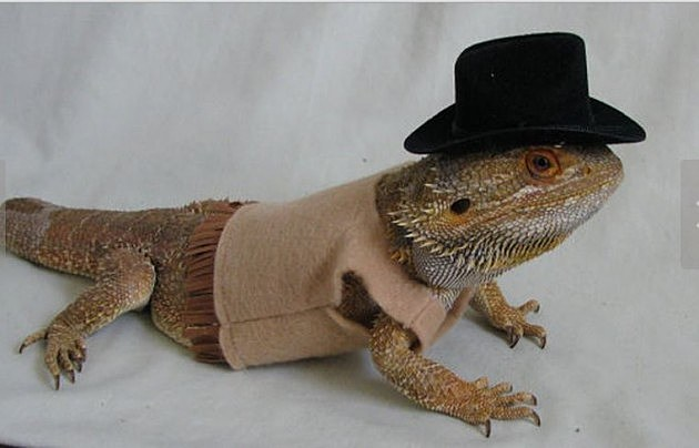 A Halloween Costume for Your Lizard! [PICTURES,OH YES]