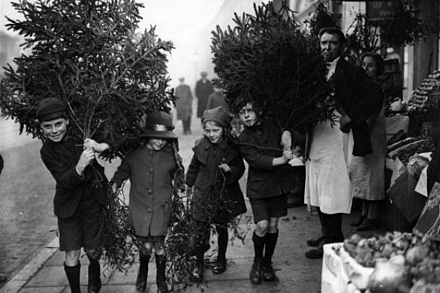 Christmas Tree Recycling Gloucester : What to do with your christmas tree feed the alpacas