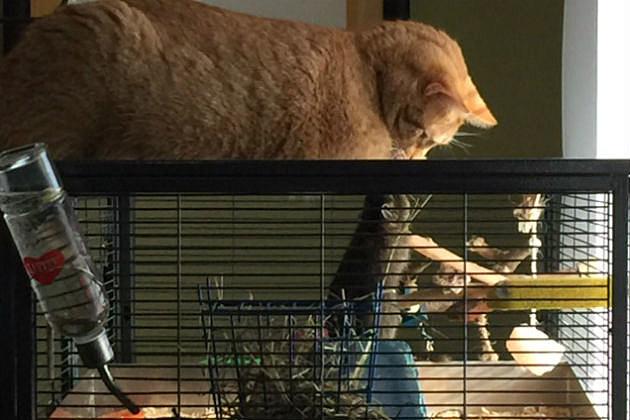 cat and degu